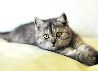 CBD Oil Cat Treats